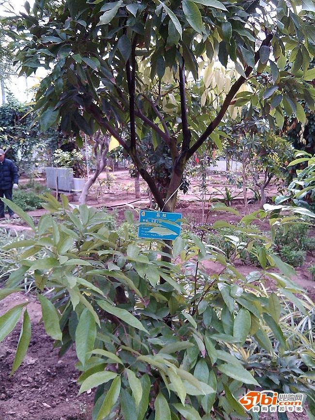 北京规模最大的热带植物园 呀路古热带植物园